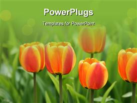 Flowers_0416 powerpoint template