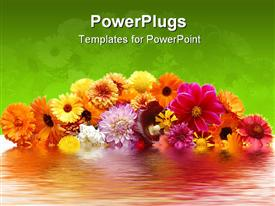 Flowers with petals of various colors and their reflex ion in water presentation background