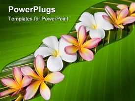 PowerPoint template displaying frangipani on green leaf. Background. tropical. flowers