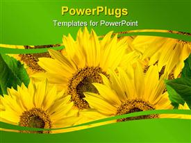 PowerPoint template displaying close up of yellow sunflowers with green leaves between green waving lines
