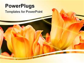 Peach colored tulips powerpoint template