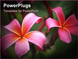 PowerPoint template displaying a pair f beautiful flowers with greenish background and place for text