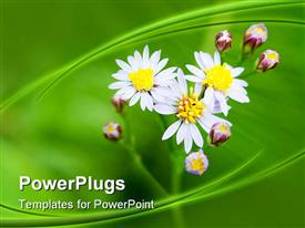 PowerPoint template displaying beautiful flowers and flower buds along with green background