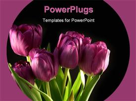 PowerPoint template displaying bunch of beautiful Purple tulips blooming with black color