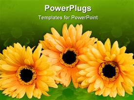 PowerPoint template displaying a number of sunflowers with greenis background