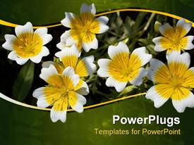 Yellow flowers nature flora seasonal romantic powerpoint design layout