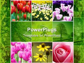 PowerPoint template displaying collage of colorful flowers red pink white yellow tulips, pink rose, yellow flowers, green trees