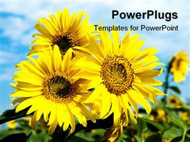 PowerPoint template displaying close-up of yellow sunflower with blue cloudy sky behind