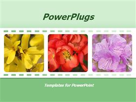 PowerPoint template displaying terrific floral template for presentations on flowers, floristry, flower care, floral design, flower