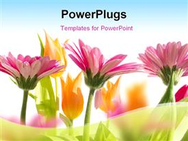 PowerPoint template displaying multi color flowers blossom in spring with sky