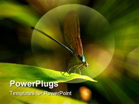 PowerPoint template displaying fly with wings up close up on top of green leaf