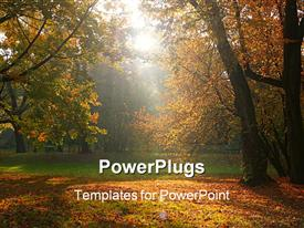 PowerPoint template displaying sun rays breaking through the trees in fall time 1019_30