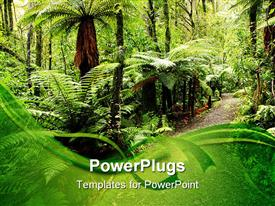 Walking trail in New Zealand tropical forest powerpoint template