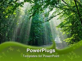 PowerPoint template displaying ground road crossing old deciduous forest with beams of light entering