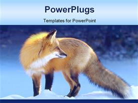 Backlit Red Fox powerpoint design layout