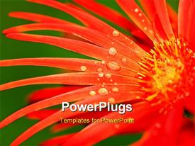 PowerPoint template displaying red flower and dew close-up on nature