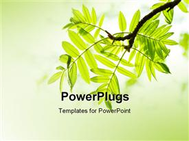 PowerPoint template displaying cool lemon background with close-up of fresh mountain ash leaves