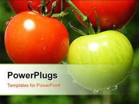 PowerPoint template displaying fresh and healthy red and green tomato against green background