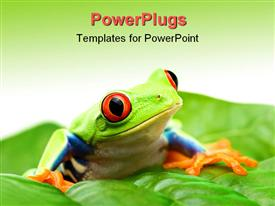 PowerPoint template displaying an animated frog sitting on a leaf with green background