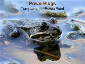 Frog in its natural habitat template for powerpoint