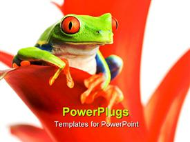 PowerPoint template displaying red-eyed tree frog perch on red leaf