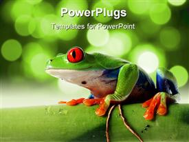 PowerPoint template displaying tree frog with red bulging eyes on bamboo tree