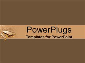PowerPoint template displaying plane solid chocolate color frame with a brown slide