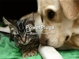 PowerPoint template displaying small brown kitten with Labrador retriever dog living together