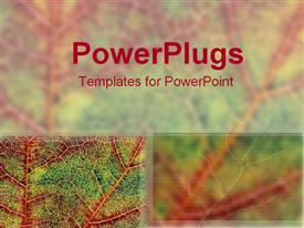 Autumn leaves template for powerpoint