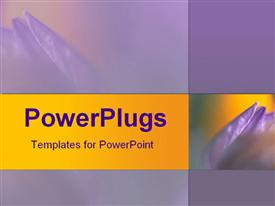 PowerPoint template displaying rich and soft lilac orchid contrasted with gold