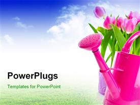 Tulip flowers and watering can powerpoint theme