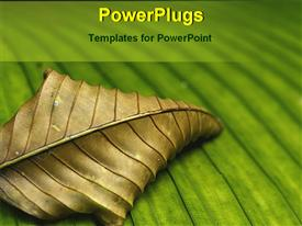 PowerPoint template displaying dead, withered, dry leaf on green leaf