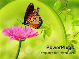 PowerPoint template displaying monarch butterfly landing delicately on pink flower
