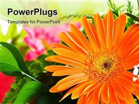 PowerPoint template displaying orange gerbera flower against green blurred background