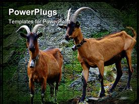 PowerPoint template displaying alp goats on rocks with big horns