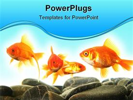 PowerPoint template displaying black stone with goldfish