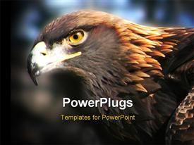 PowerPoint template displaying close up shot of a golden eagle on a blurry background