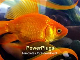 Gold fish template for powerpoint