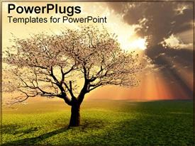 PowerPoint template displaying spring blossom tree stands illuminated from golden sunlight