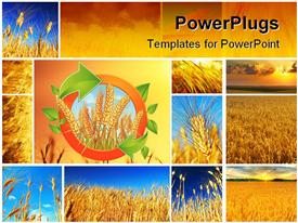 PowerPoint template displaying wheat field collage conceptual collection of growth in the background.