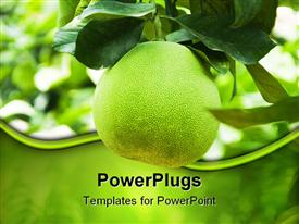 PowerPoint template displaying green grapefruit growing on branch, nutrition, health, agriculture