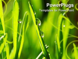 Dew drop on a blade of grass powerpoint design layout