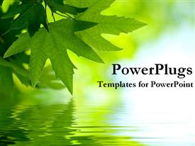 PowerPoint template displaying green maple leaves reflected on the water surface on green and light blue background