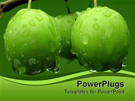PowerPoint template displaying green cherry plums covered with drops of dew, rain, green wave border