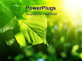PowerPoint template displaying fresh green leaf of linden tree glowing in sunlight