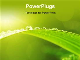 PowerPoint template displaying green leaf with dews in morning