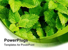 PowerPoint template displaying background with green leafs in garden. close up