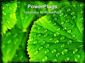 PowerPoint template displaying background texture of green leaf with water drops