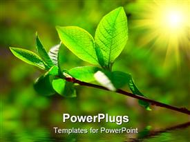 PowerPoint template displaying green leaves on plant with bright sunlight illuminating it