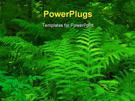 PowerPoint template displaying green fern leafs in the forest and sun lights